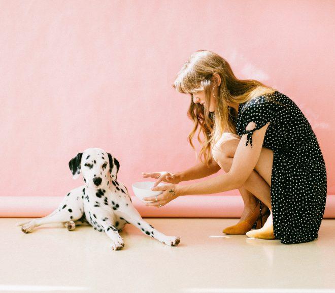 Een goede hondenbench helpt jou en je hond vooruit
